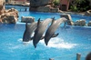Dolphins_flying