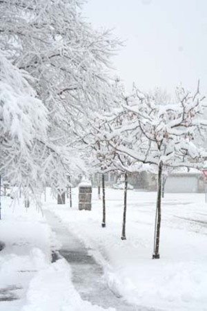 Snow_our_street